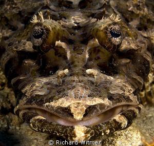 Crocodile Fish in Komodo. G9/Ikelite DS160s. by Richard Witmer