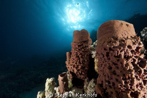 Prickly tube sponge taken at Ras-umm-sid. by Stephan Kerkhofs