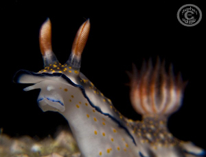 Nudi Sniffing the Air...Canon G10 2xUCL165, 1xYS27DX, 1xY... by Stephen Holinski