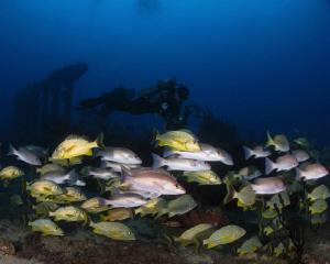 Schooling fish at the Rhone. by Juan Torres