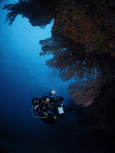 An underwater photographer at Blonde Rock, BVI. by Juan Torres