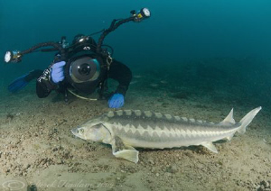 Mark with sturgeon. Capernwray. D200, 10.5mm. by Derek Haslam