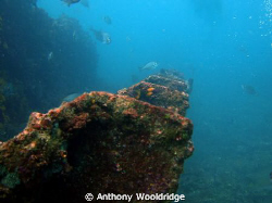 A few of the ribs from the wreck of the Patti off POrt El... by Anthony Wooldridge