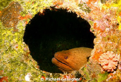 Moray in a porthole by Michael Gallagher