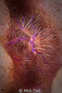 Hairy!  Canon 20D 100mm Macro by Mick Tait