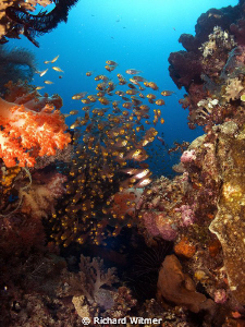 Soft coral and fish.  G9/DS160s/Wide Angle Lens. by Richard Witmer