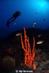 Wide angle from Bodrum Big Reef/Turkiye. by Alp Baranok