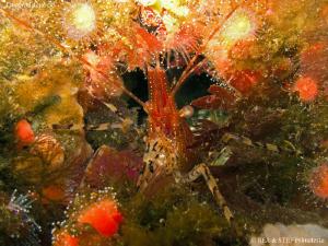 Firework. Quadra Island, BC. Canon G10. by Bea & Stef Primatesta