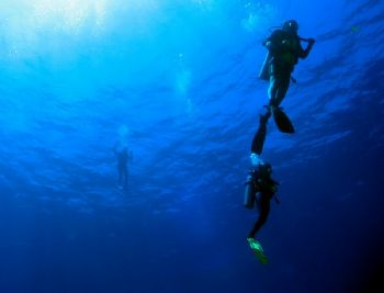 Divers at Fernando de Noronha, Macaxeira site with 50m vi... by Athila Bertoncini Andrade