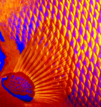 Fish of a different color by Beverly J. Speed
