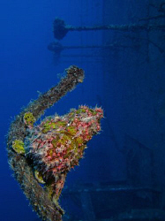 Frogfish on the Salem Express. Canon G9, Ikelite DS51 str... by James Dawson