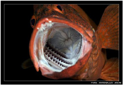 I can see you lunch dude !!!!....... Fuji S5 pro/ 105 VR by Yves Antoniazzo