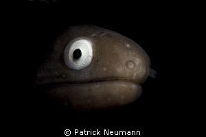 beautiful eyes by Patrick Neumann