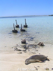 Another day in paradise, Abrolhos Islands ;) by Chloe Taylor