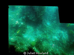 Corals throough the Bottom of a Glass-Bottomed Boat.