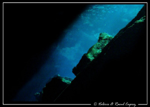 PADI logo - naturel new look. Picture taken with a Canon... by Raoul Caprez
