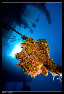 Frogfish on the Salem Express at sunset  (2) by Dray Van Beeck