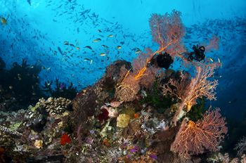 On Cherie's Reef in Milne Bay, PNG, the water was so teem... by Erin Quigley