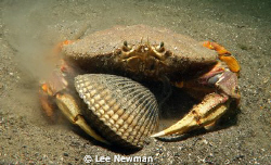 """""""I found it, it's mine!"""" Crab and cockle, shot with a Can... by Lee Newman"""