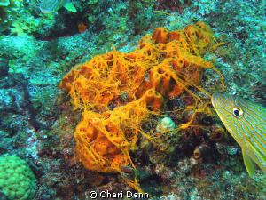 Sponges spawning by Cheri Denn