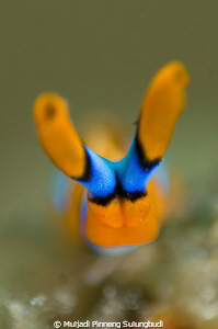 """HEAD ON"". Narrow DOF only on the head. by Muljadi Pinneng Sulungbudi"