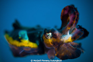 Dancing with flambo..... I focus only on the eye to get t... by Muljadi Pinneng Sulungbudi