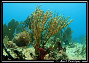Picture taken with a Canon G9 in Cozumel. by Raoul Caprez