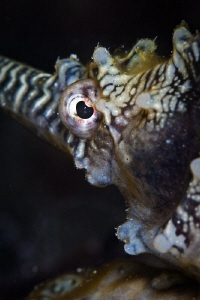Seahorse at Robbs Jetty.  Canon 20D 100mm macro 500D diop... by Mick Tait