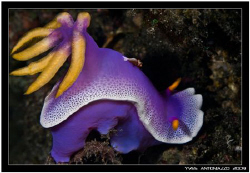 My first nudi and shrimp together     Fuji S5 pro/105 VR by Yves Antoniazzo