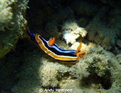 Nudi by Andy Hamnett