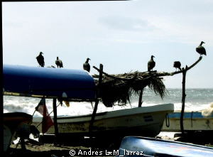 Vultures waiting for the fishermen. by Andres L-M_larraz