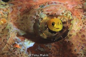 Porthole by Tony Makin