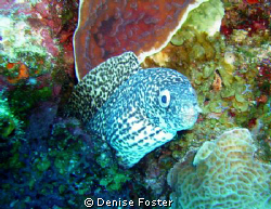 This little guy loved having his picture taken! Sea and S... by Denise Foster