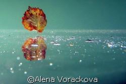 European pond - Autumnal serene mood. by Alena Vorackova