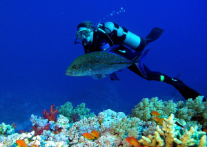 This was an 'opportunity' shot of one of my fellow divers... by Carol Cox