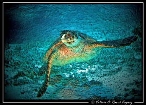 Painted turtle.  Picture taken with a Canon G9. by Raoul Caprez