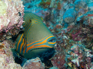 I know i should  know hte name of this fish, but I don't.... by Andrew Macleod