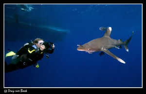 videographer and oceanic white tip by Dray Van Beeck
