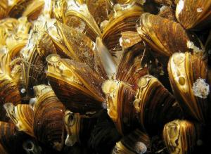 ..Mussels by Veronika Matějková
