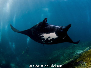 Black beauty shot on Manta Point, Nusa Penida around full... by Christian Nielsen