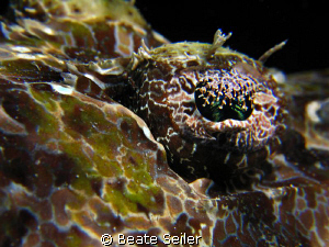 The eye of a crocodile fish, taken at Wakatobi with Canao... by Beate Seiler
