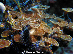 some kind of coral ? taken at Wakatobi with Canon S70 by Beate Seiler