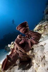 Prickly tube-sponge taken in Ras Mohammed. by Stephan Kerkhofs