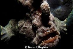 """""""SHADOW"""" by Bernard Maglana"""