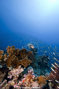 Scenery at Yolanda reef, Ras Mohammed. by Stephan Kerkhofs