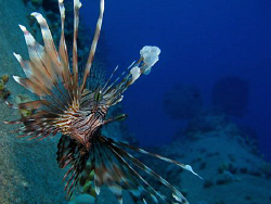 Common Lionfish over the Salem Express. Canon G9 and Ikel... by James Dawson