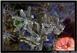 Flowers of the sea     Fuji S5 pro/105 VR + UCL by Yves Antoniazzo