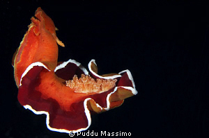 spanish dancer in night dive,nikon d2x 60 mm micro by Puddu Massimo