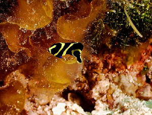 Diving on paradise Reef in Cozumel seems to be like divin... by Steven Anderson