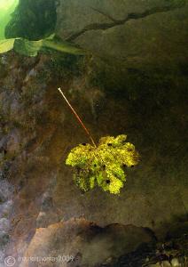 Autumn Leaf. River Lune, Cumbria. D3, 15mm 1.4 T/C by Mark Thomas